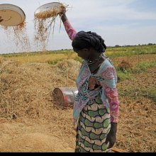 الفاو والبنک الدولی یعززان شراکتهما للقضاء على الجوع والفقر
