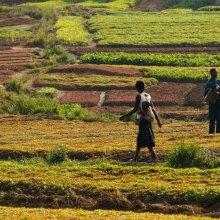 الفاو: المناطق الریفیة هی مفتاح النمو الاقتصادی فی البلدان النامیة